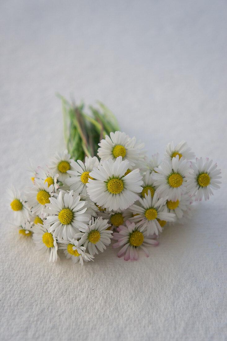 Posy of daisies