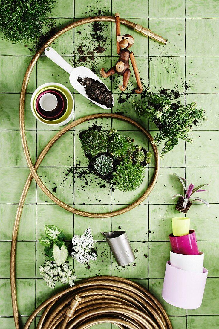 Gartenschlauch, verschiedene Grünpflanzen und Übertöpfe