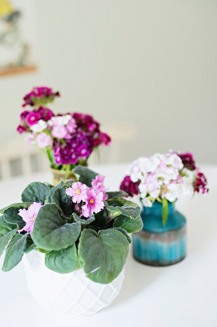 Potted African violet and sweet William in retro vases