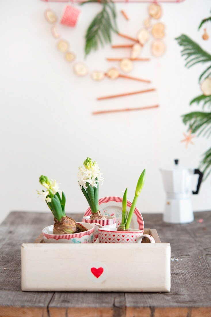 White hyacinths in drawer on wooden table, espresso pot and garland of dried apple slices on wall in background