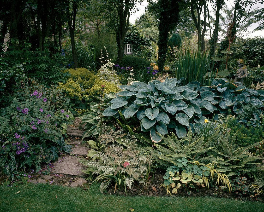 Hosta hybrids, ferns, geranium and alchemilla