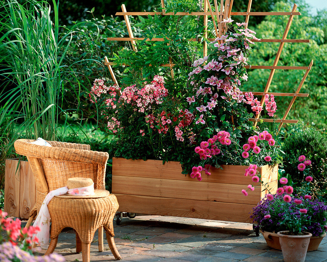 Larch wood container with trellis as a privacy screen with Erigeron