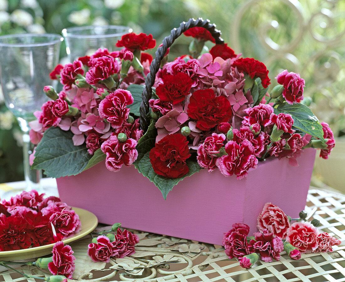 Dianthus (Carnation), Hydrangea (Hydrangea)