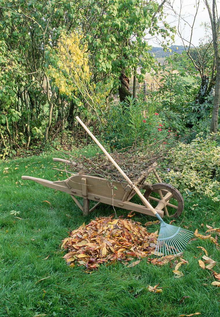 Foliage collapse, wooden wheelbarrow, leaf rake
