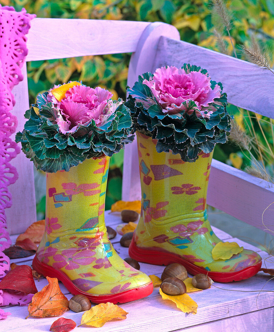 Brassica in children's rubber boots on bench, autumn leaves, chestnuts