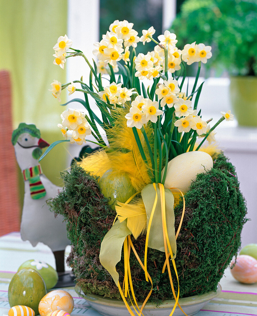 Wire and moss easter nest filled with Easter eggs and Narcissus 'Minnow'