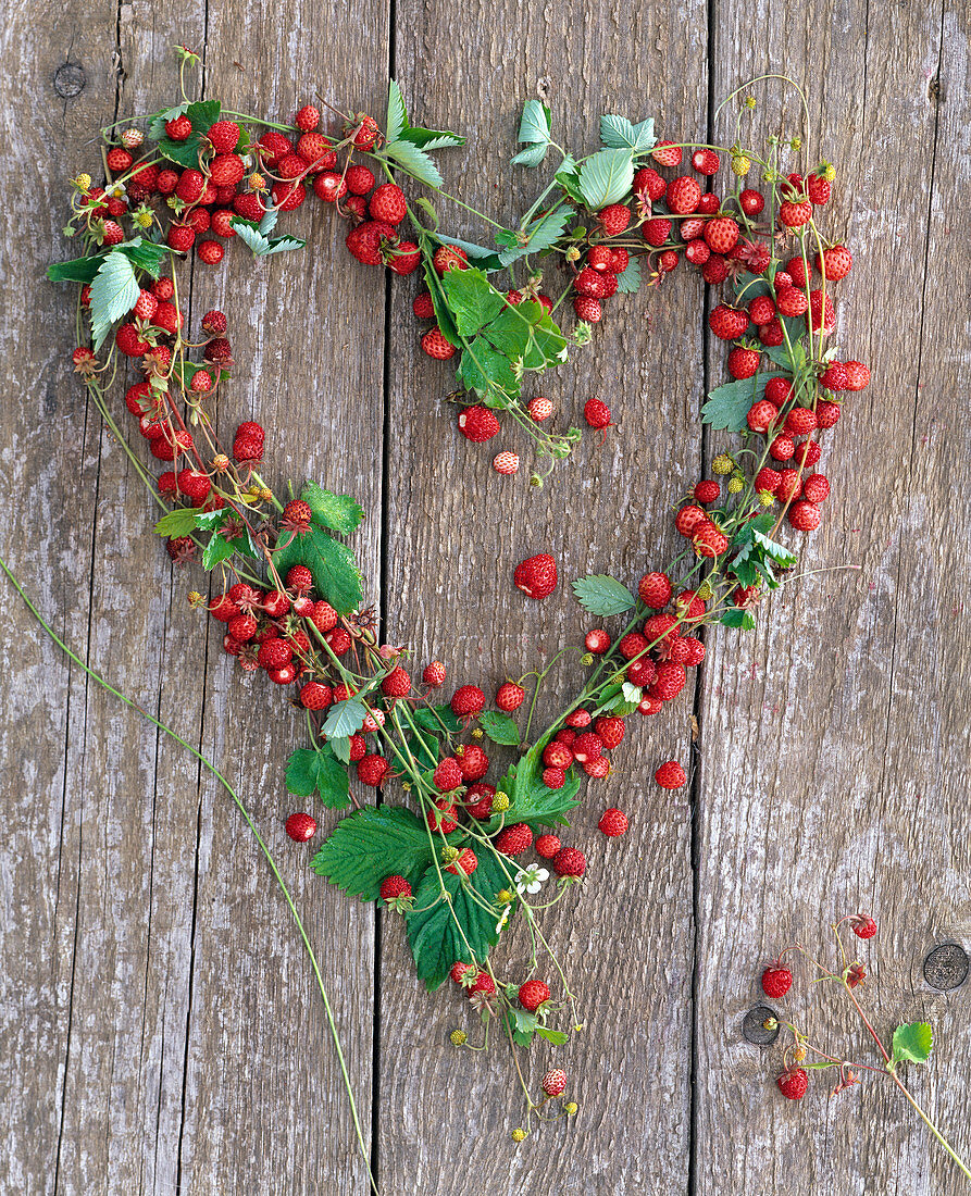 Heart made of tendrils of Fragaria (wild strawberries) placed on wooden wall