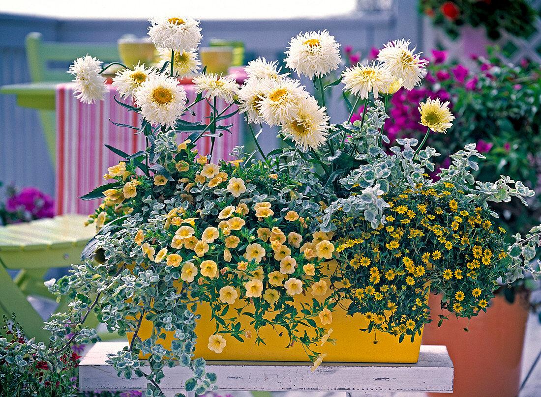 Yellow wooden flower box planted white-yellow