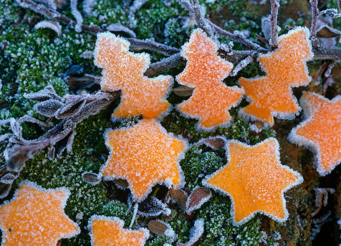 Fir trees and stars made of gouged out citrus peel