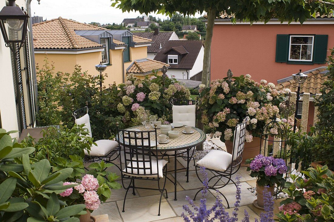 Shaded terrace with Hydrangea, Rhododendron