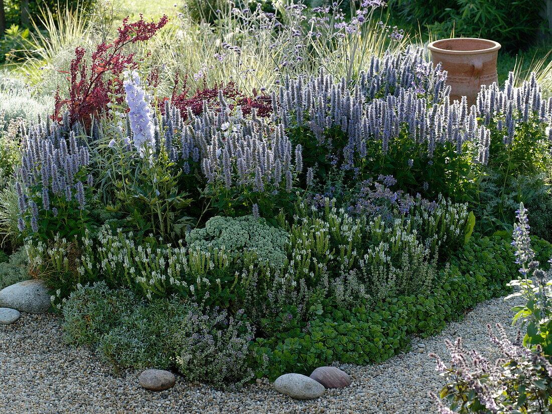 Blue-white scent with Agastache (fragrance nettle), Salvia nemorosa