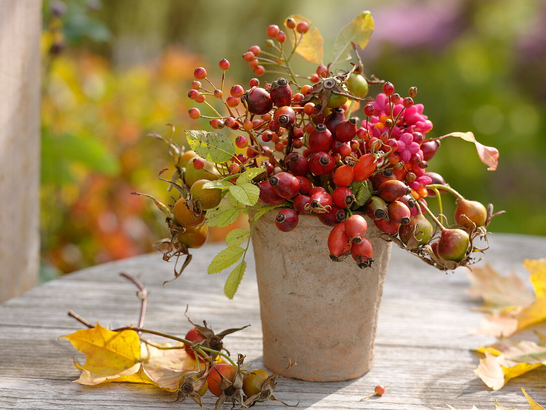 Autumn bouquet with roses (rosehip) and fruit stalls of Euonymus