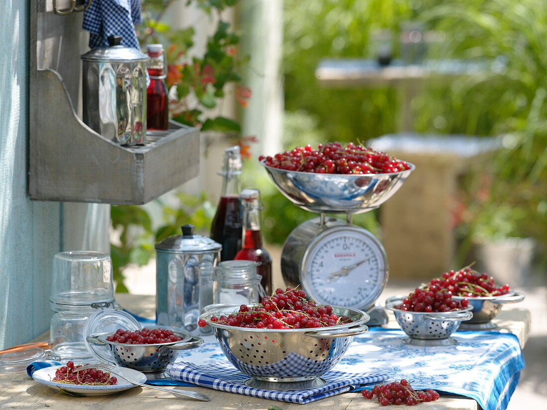 Prepare currants (Ribes rubrum) for canning