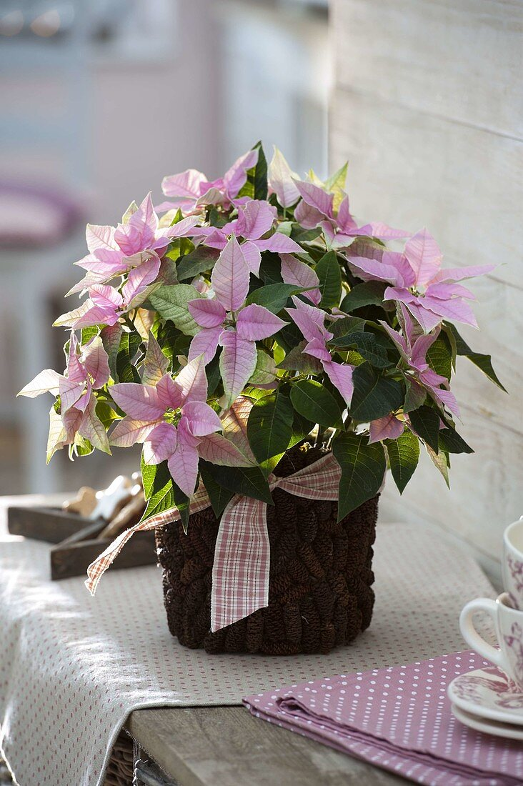 Yoghurt bucket with alder cone as a planter