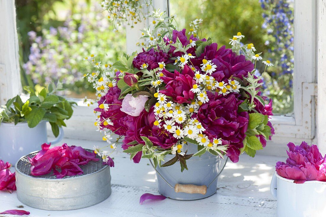 Early summer bouquet of Paeonia (peony), chamomile