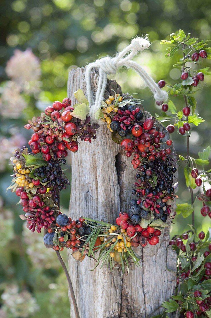 Wreath of wild fruits, sorbus, hippophae