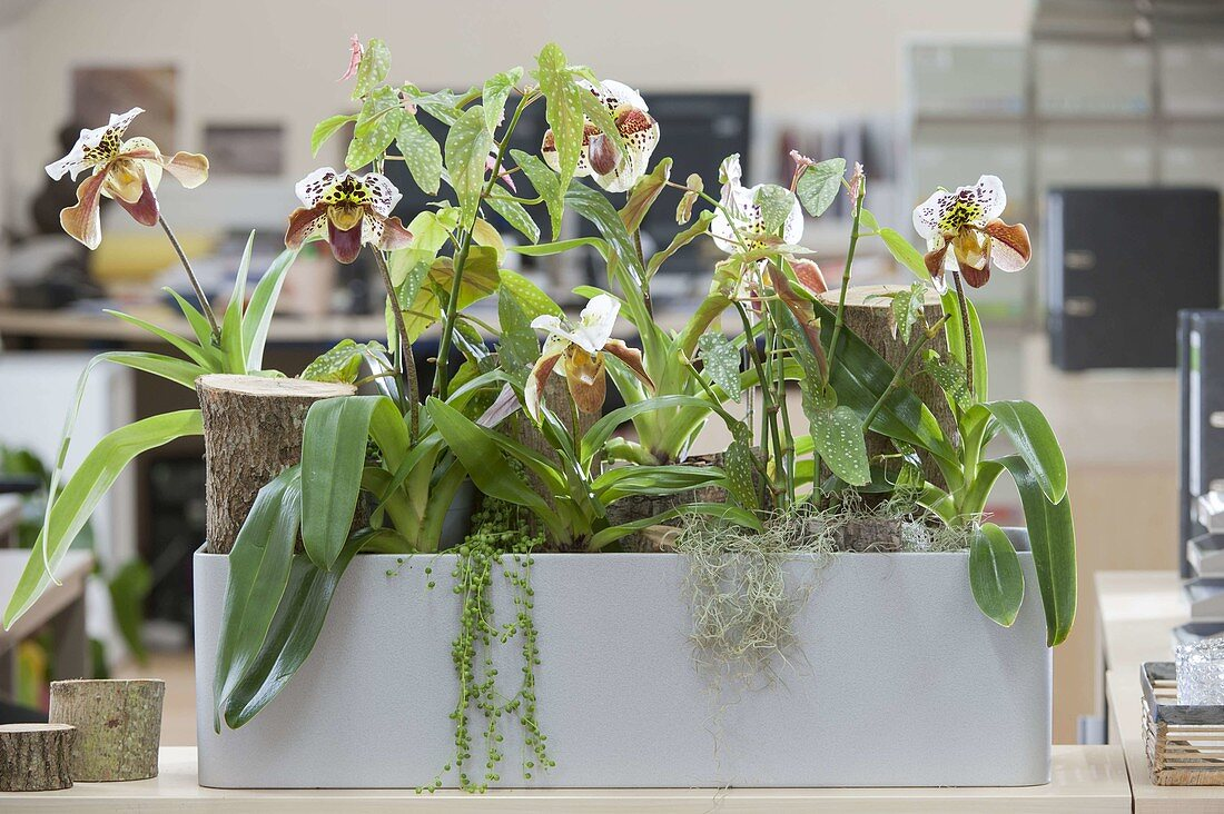 Plants provide a good indoor climate in the office