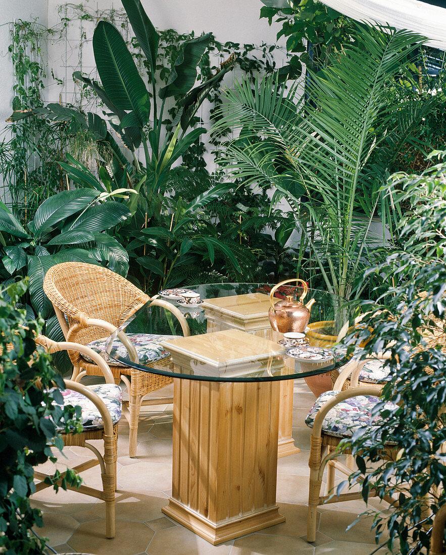Spathiphyllum, Ravenea rivularis, Ficus, Sparmannia