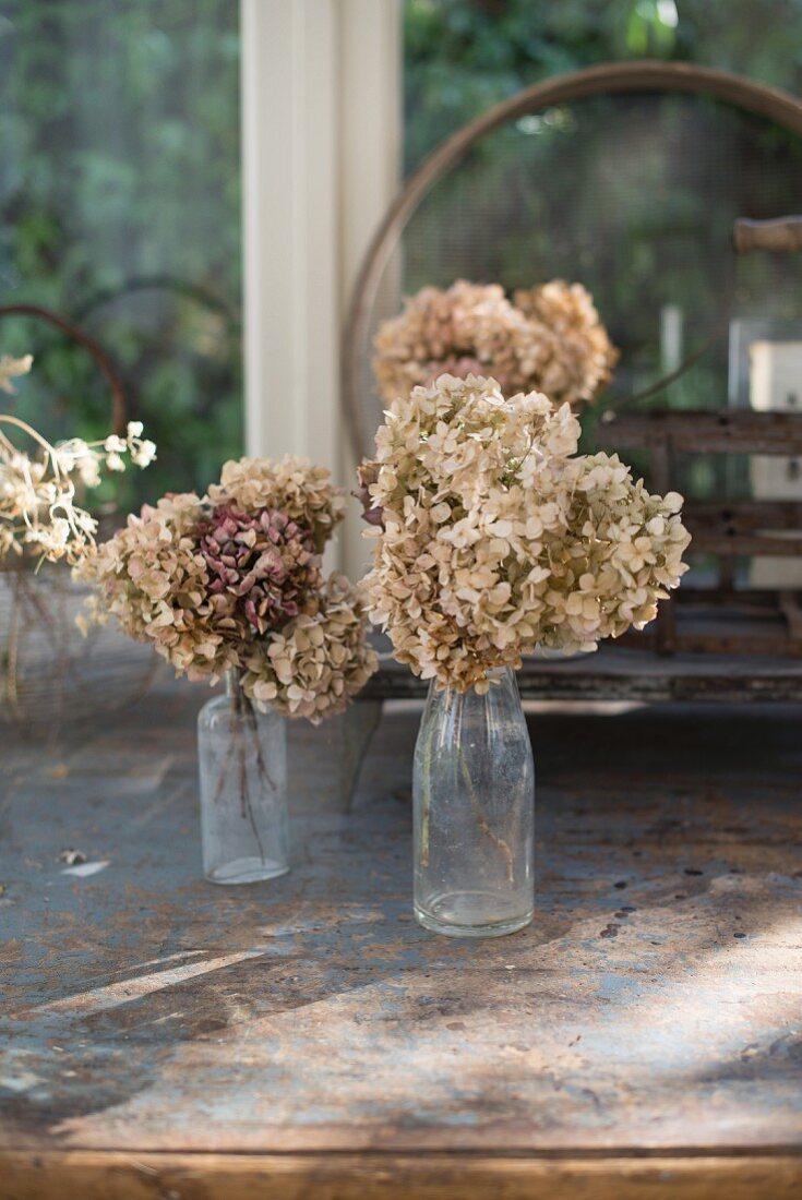 Dried hydrangeas in old glass bottles