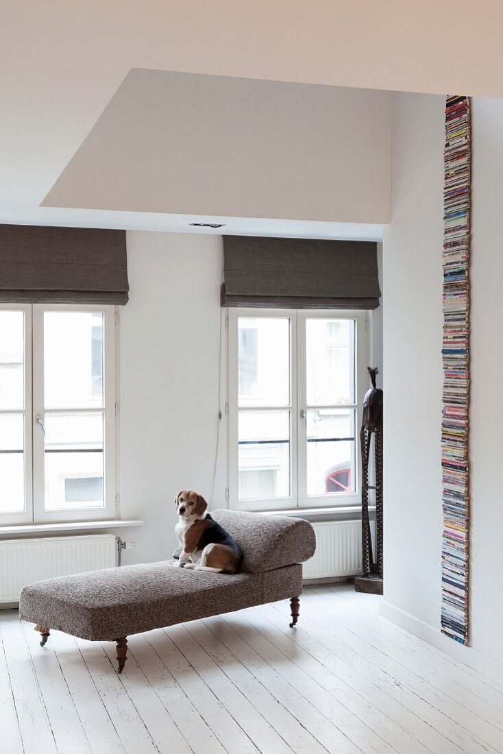 White wooden floor and dog on antique chaise longue in renovated period apartment