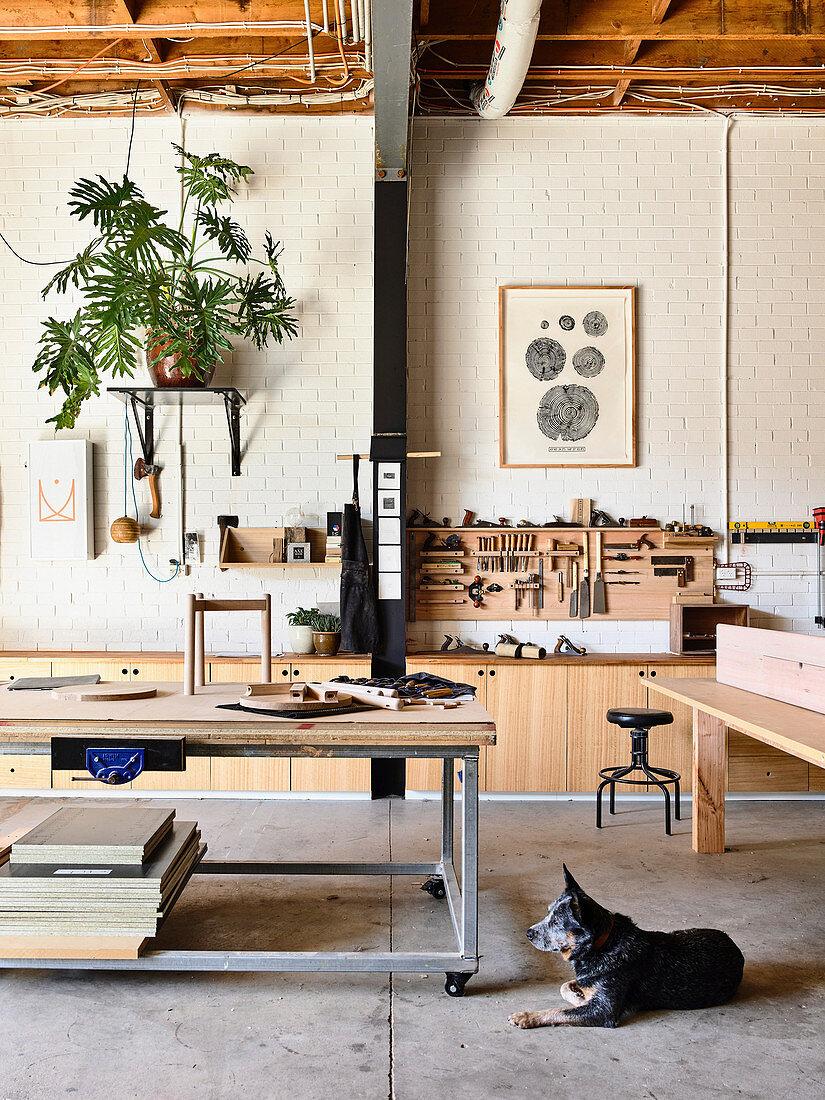 Dog lies in a carpenter's workshop