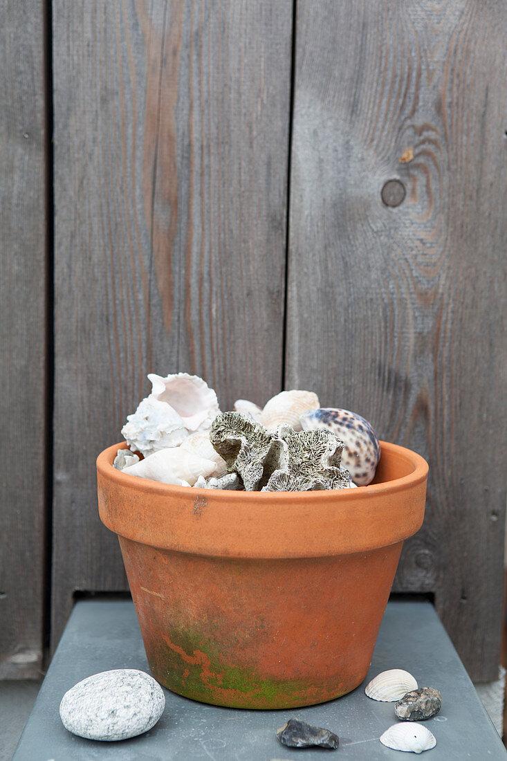 Seashells in terracotta pot