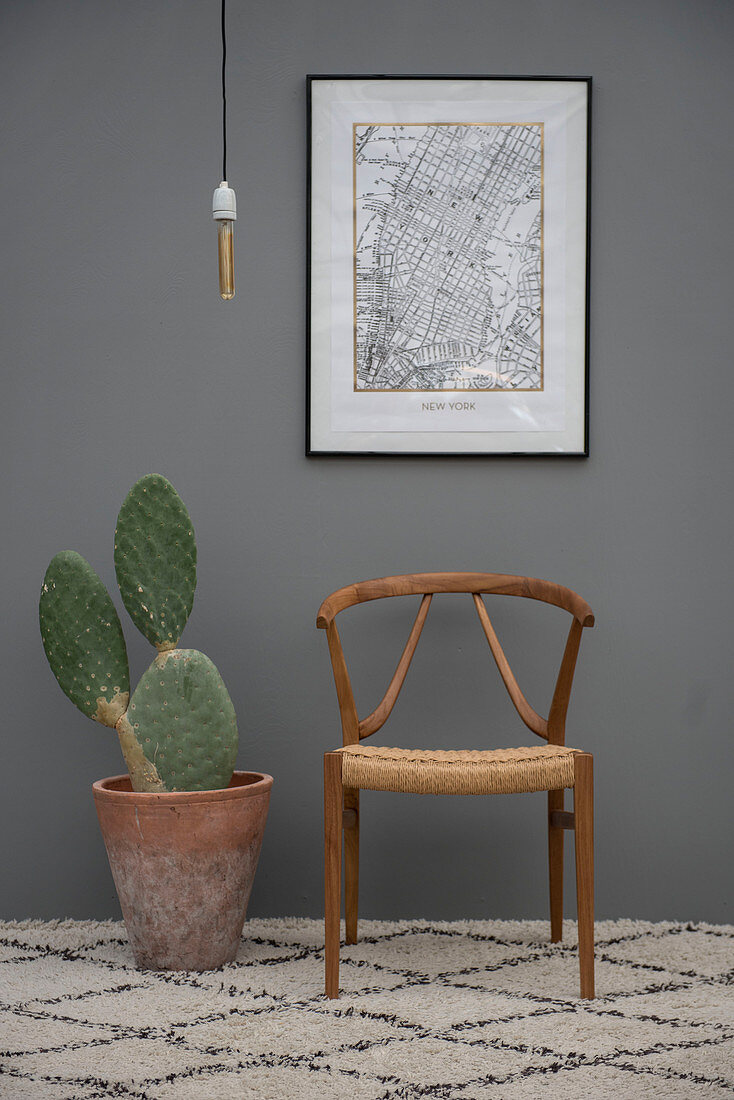 Cactus in terracotta pot and designer chair against grey wall