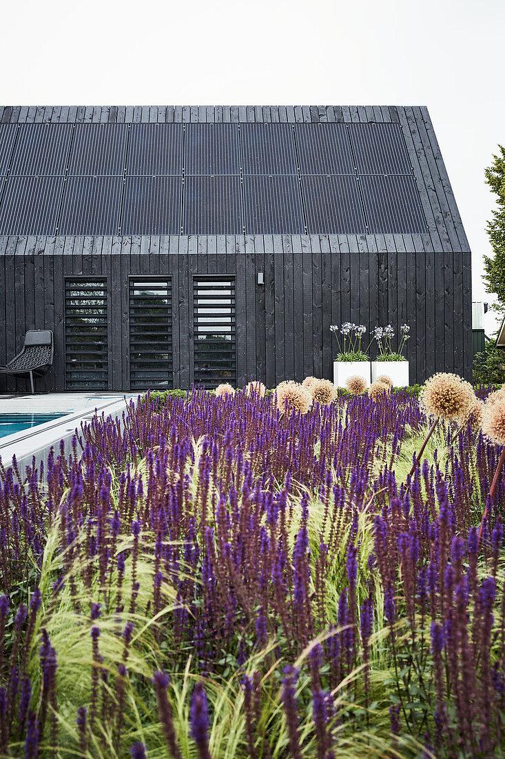 Bed of purple flowers outside black, modern house