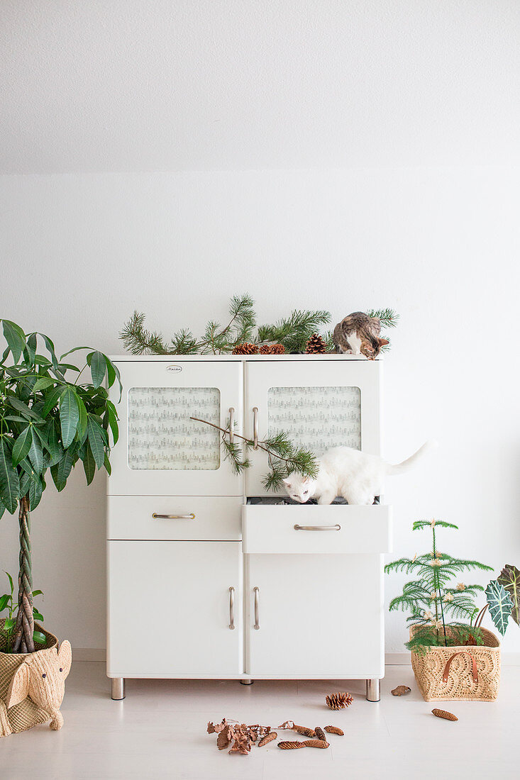 Cat standing in open draw of white kitchen dresser decorated with natural materials