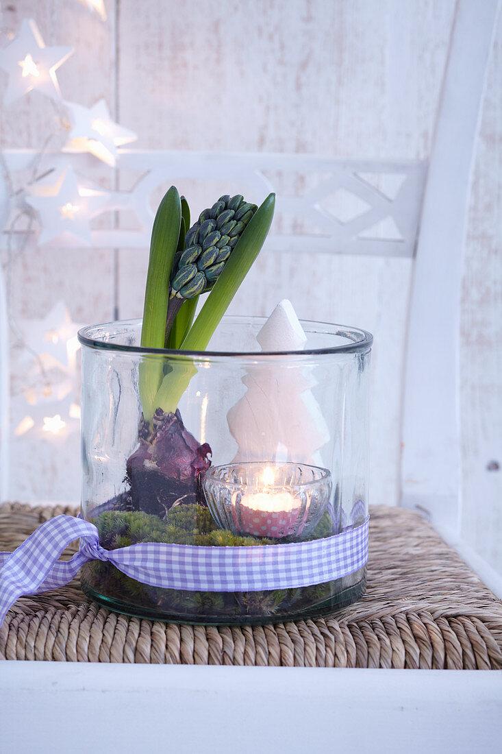 Adventsdeko aus Hyazinthe, Teelicht und Deko-Tannenbäumchen arrangiert in Glasgefäss