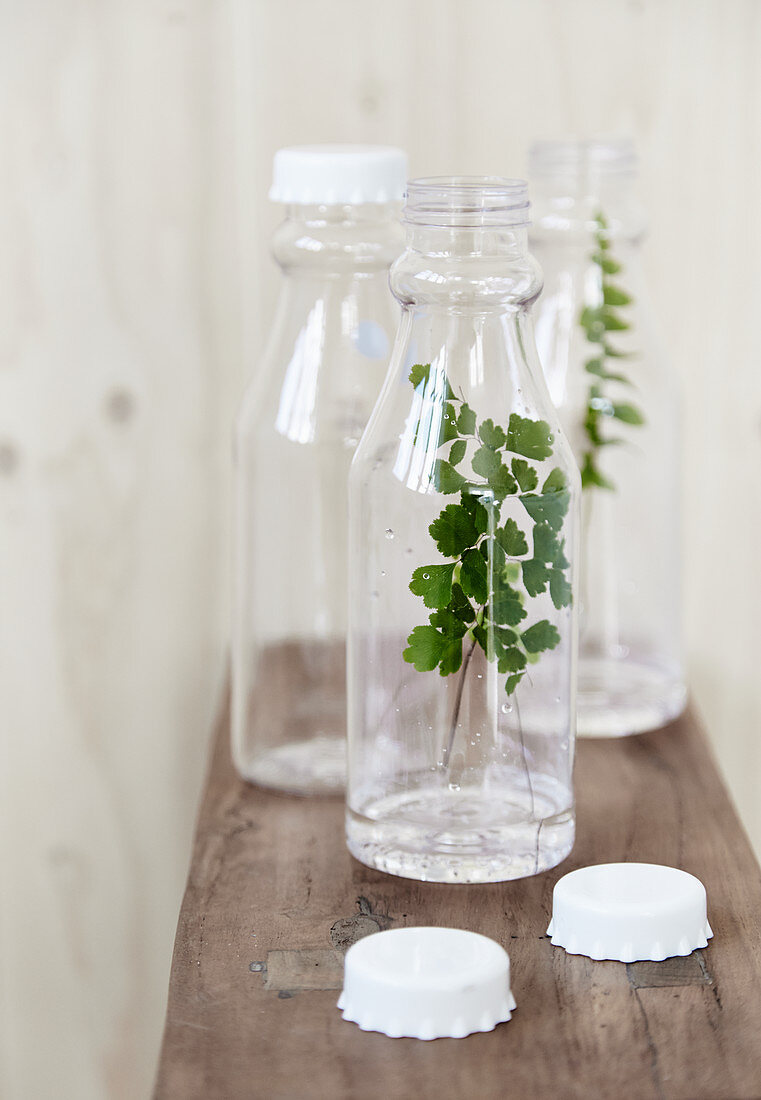 Arrangement of twigs in plastic bottles