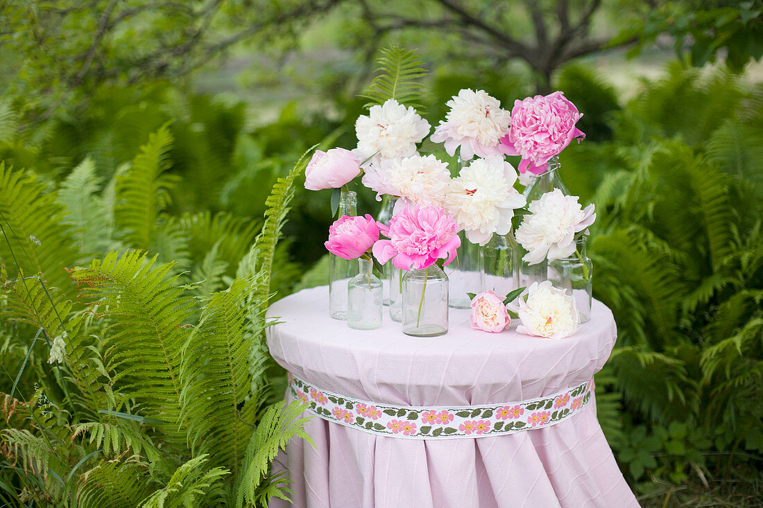 Peonies in glass bottles on table amongst ferns