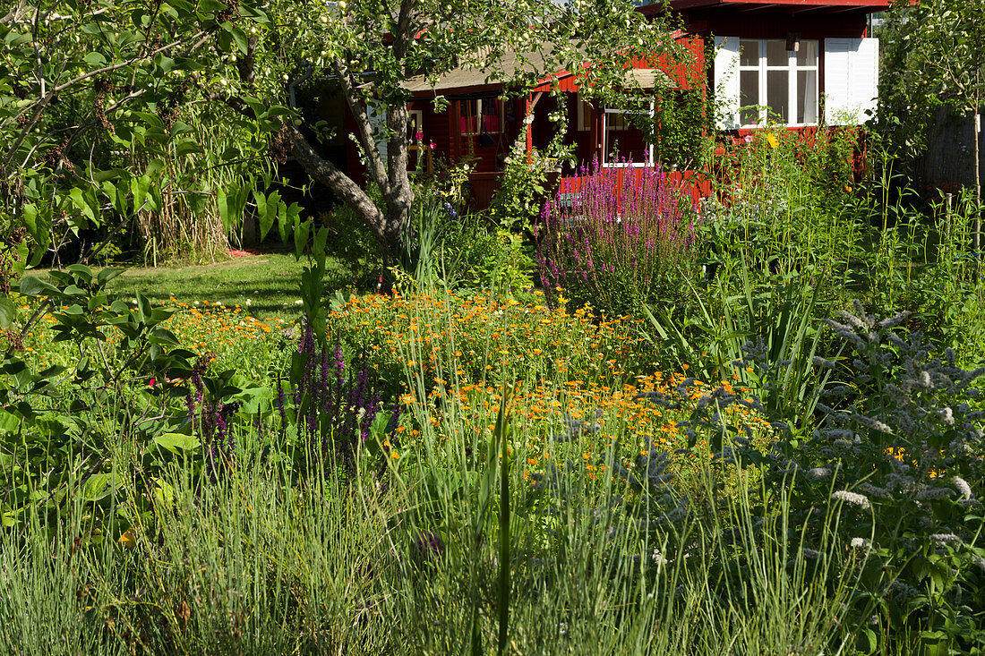 Natural Garden With Garden House