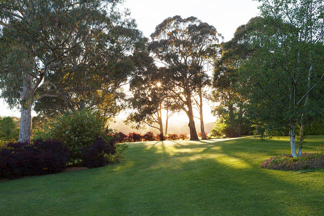 Lawn and trees in a landscaped garden