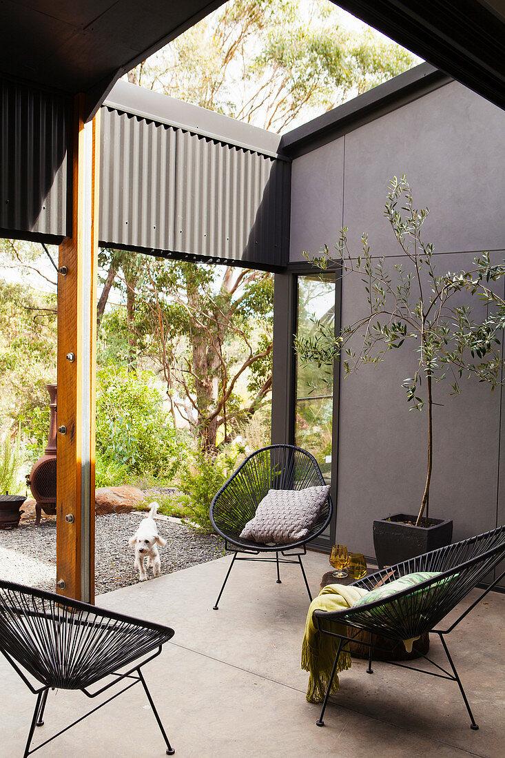 Klassikerstühle und Bäumchen auf geschützter Terrasse