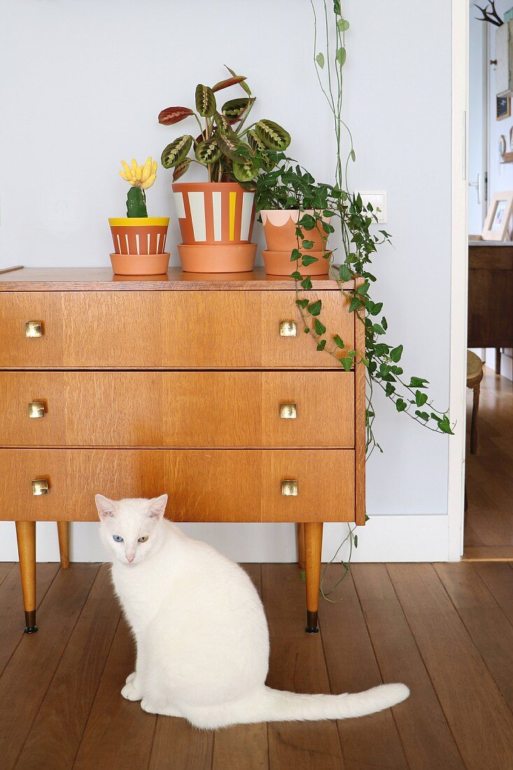 Cat in front of plants in painted pots on top of retro cabinet