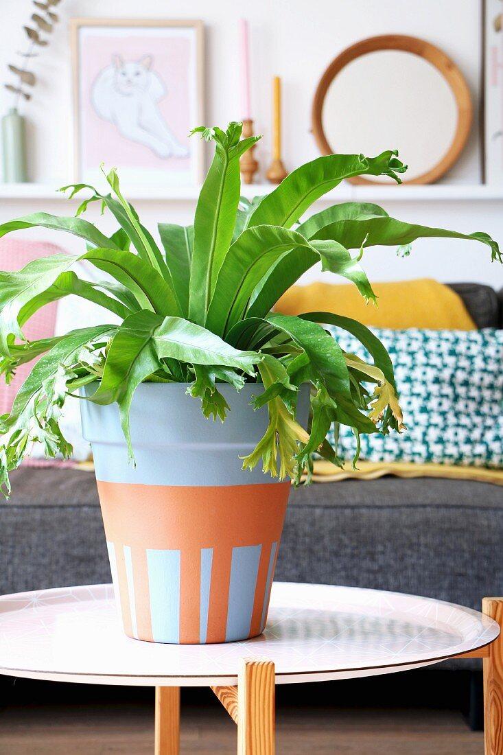 Bird's nest fern in painted terracotta pot