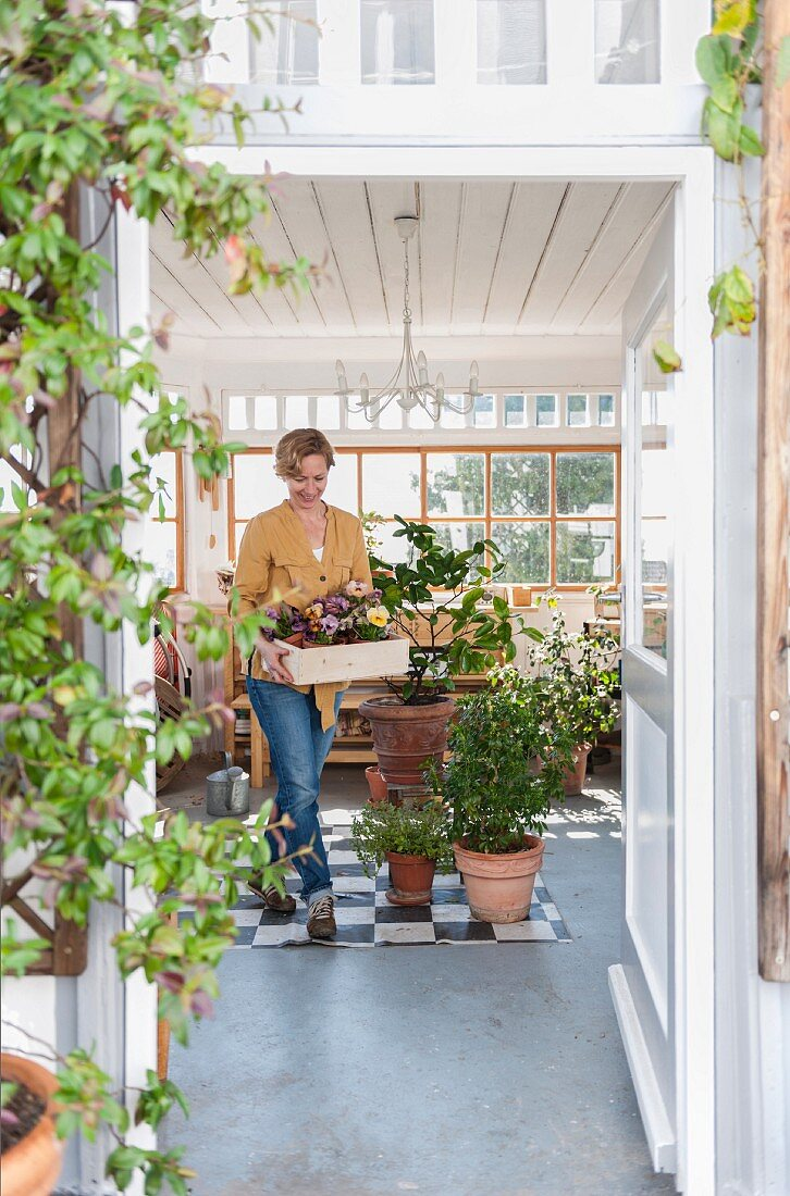 Woman holding wooden box of primulas in conservatory