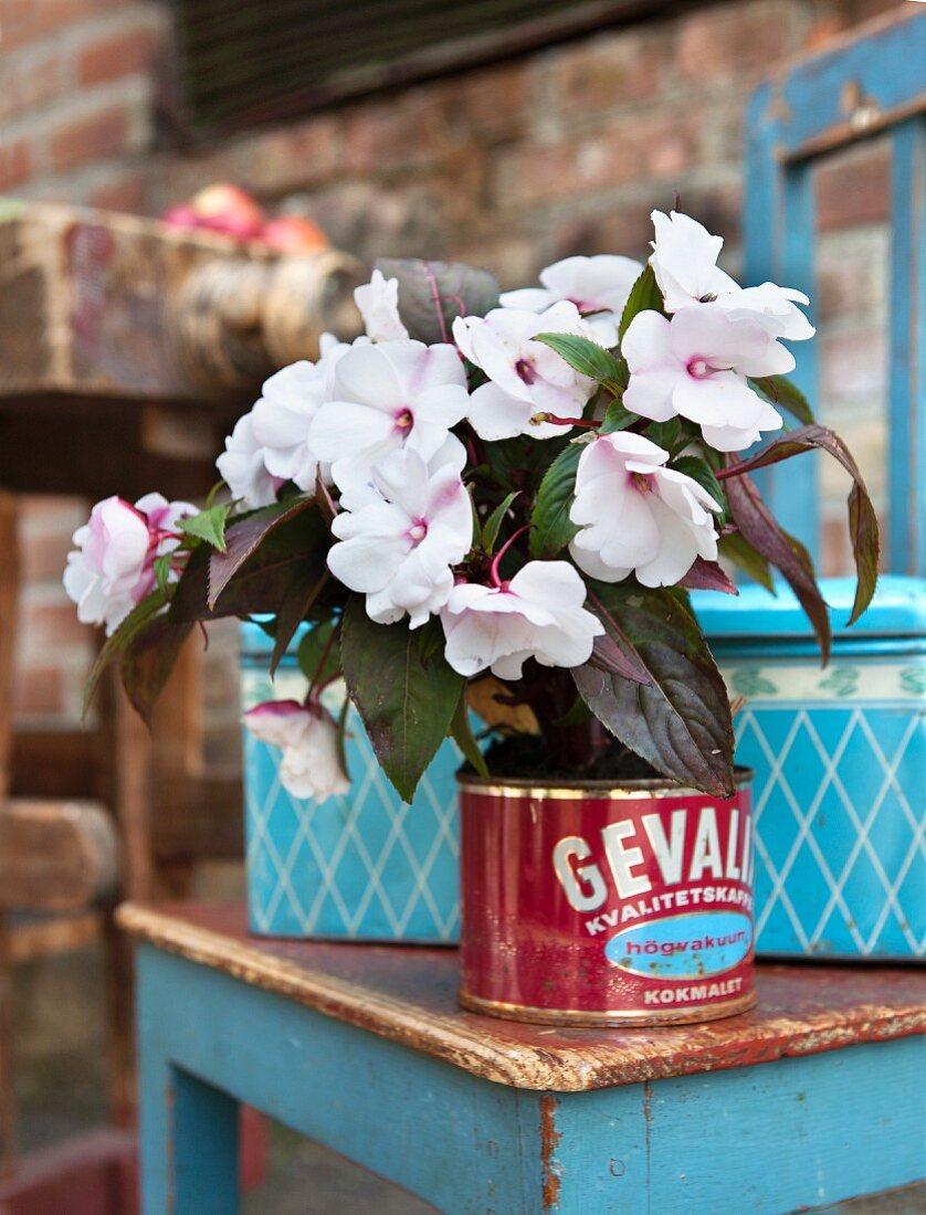 Topfpflanze in alter Kaffeedose