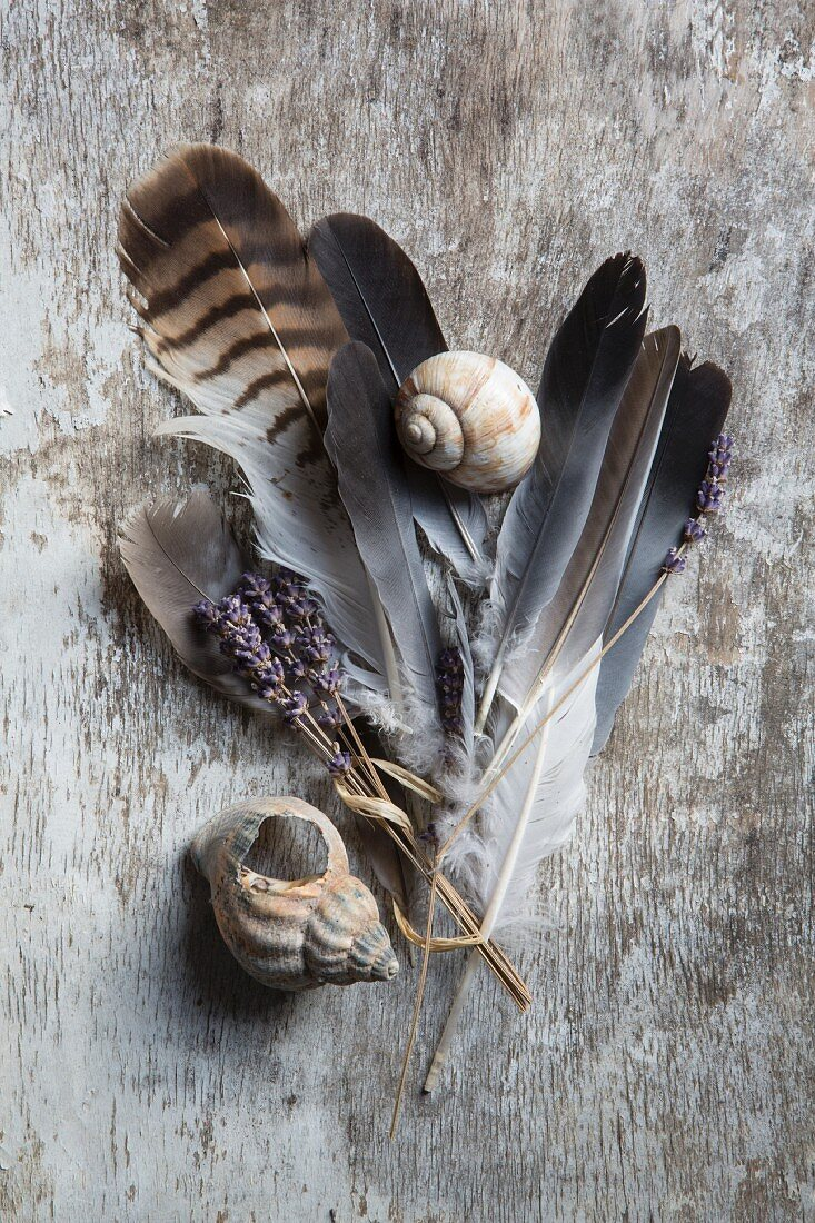 Feathers, lavender and snails' shells on vintage wooden surface