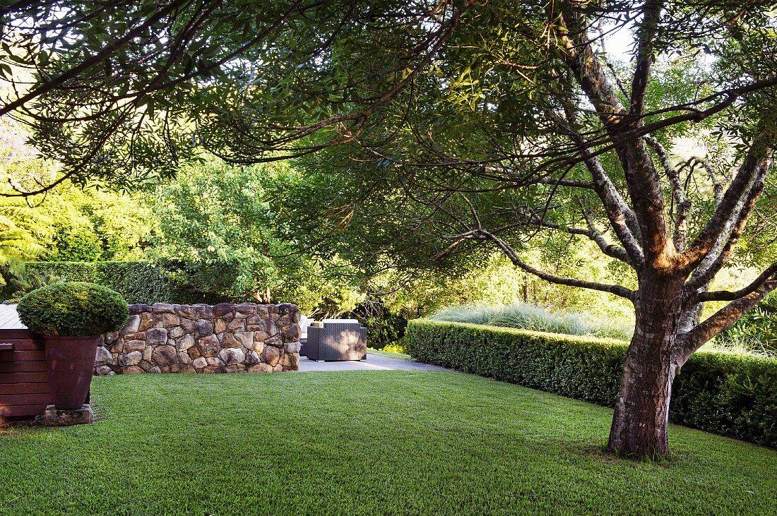 Prächtiger Baum auf Rasenfläche, abgegrenzt durch Buchsbaumhecke und Natursteinmauer