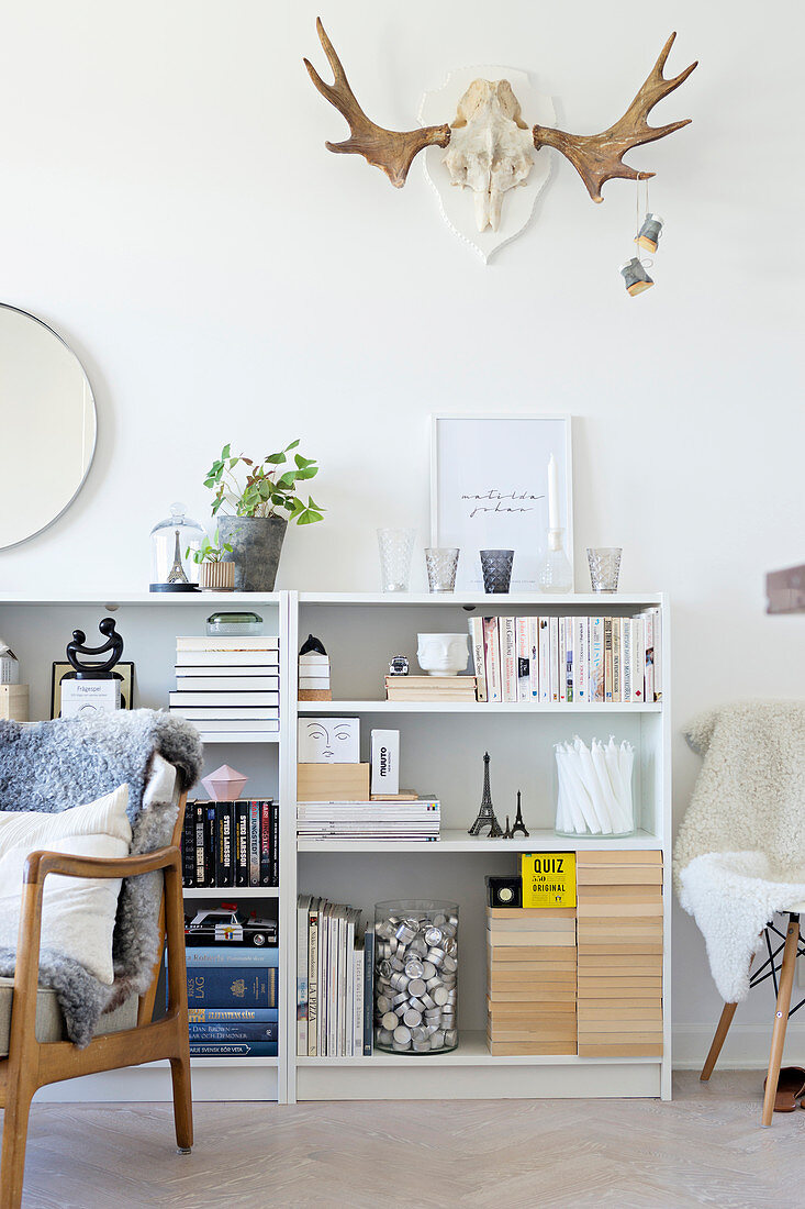 Hunting trophy on wall above shelves full of books and ornaments