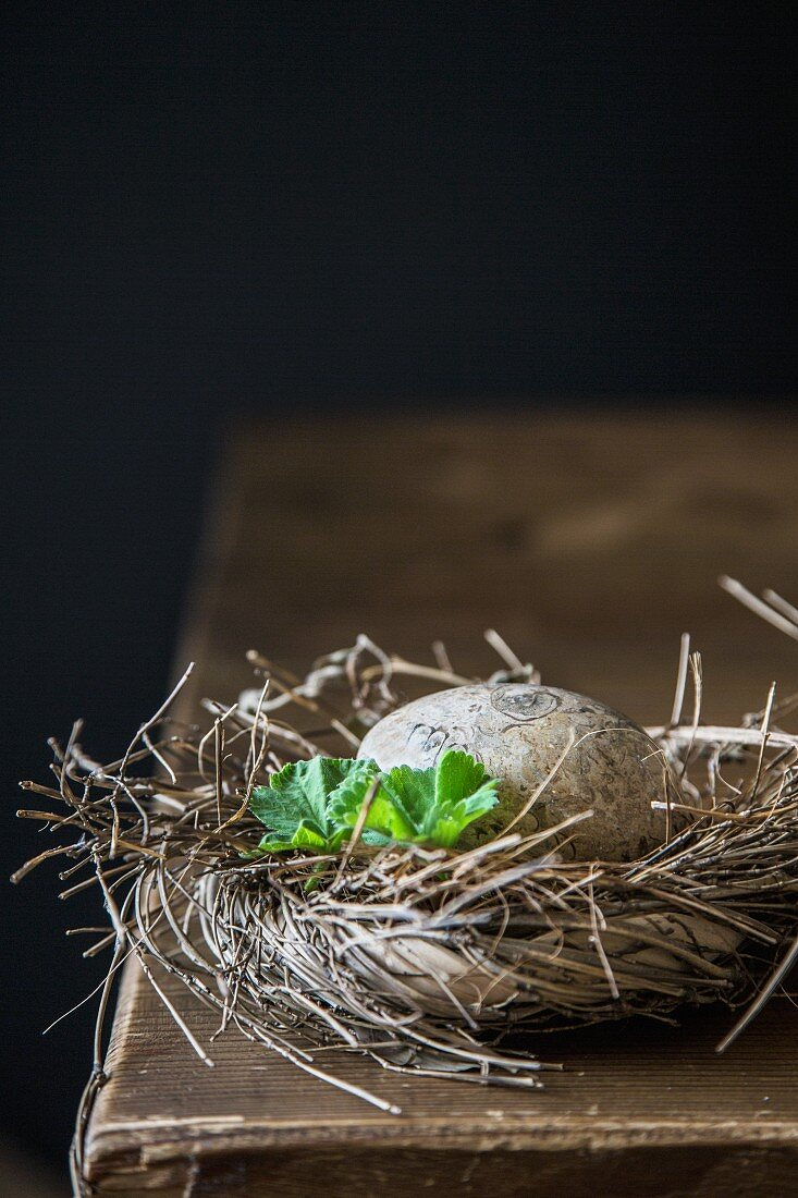 Egg in nest of twigs against black background