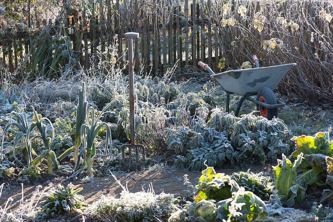 Frozen vegetable and garden herb with grave fork and wheelbarrow