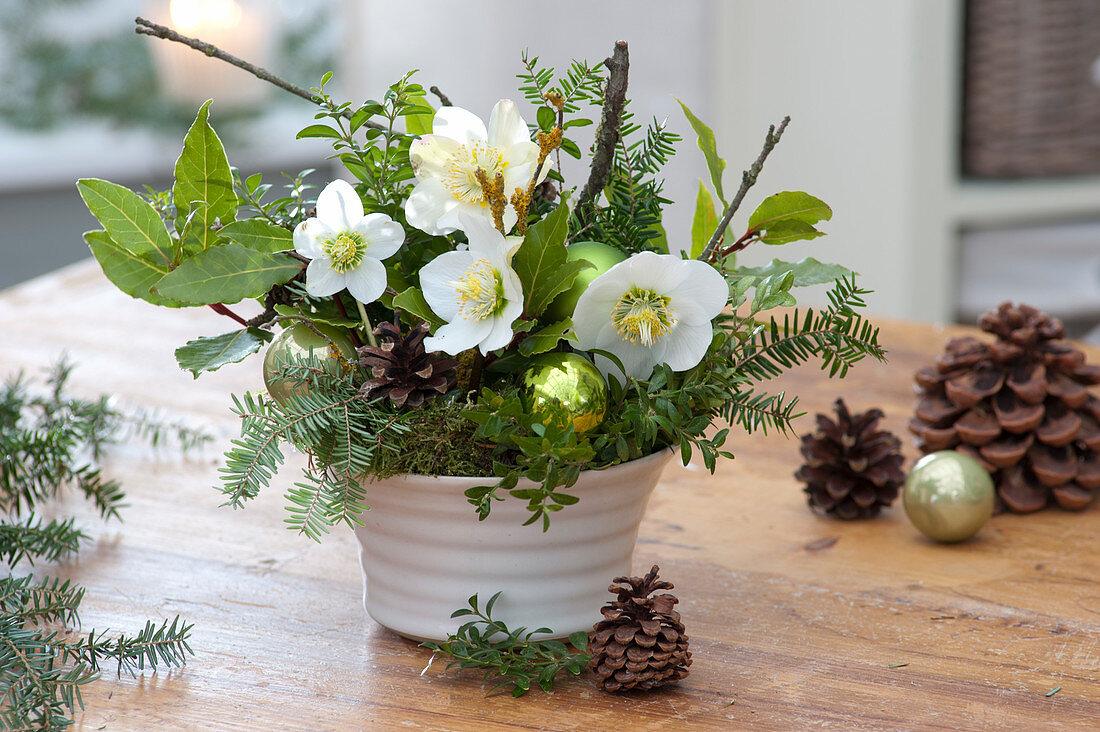Christmas arrangement with Helleborus niger (Christmas rose)