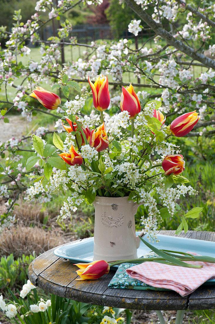 Frühlingsstrauß im Krug : Tulipa 'Synaeda King' ( Lilienblütige  Tulpen )