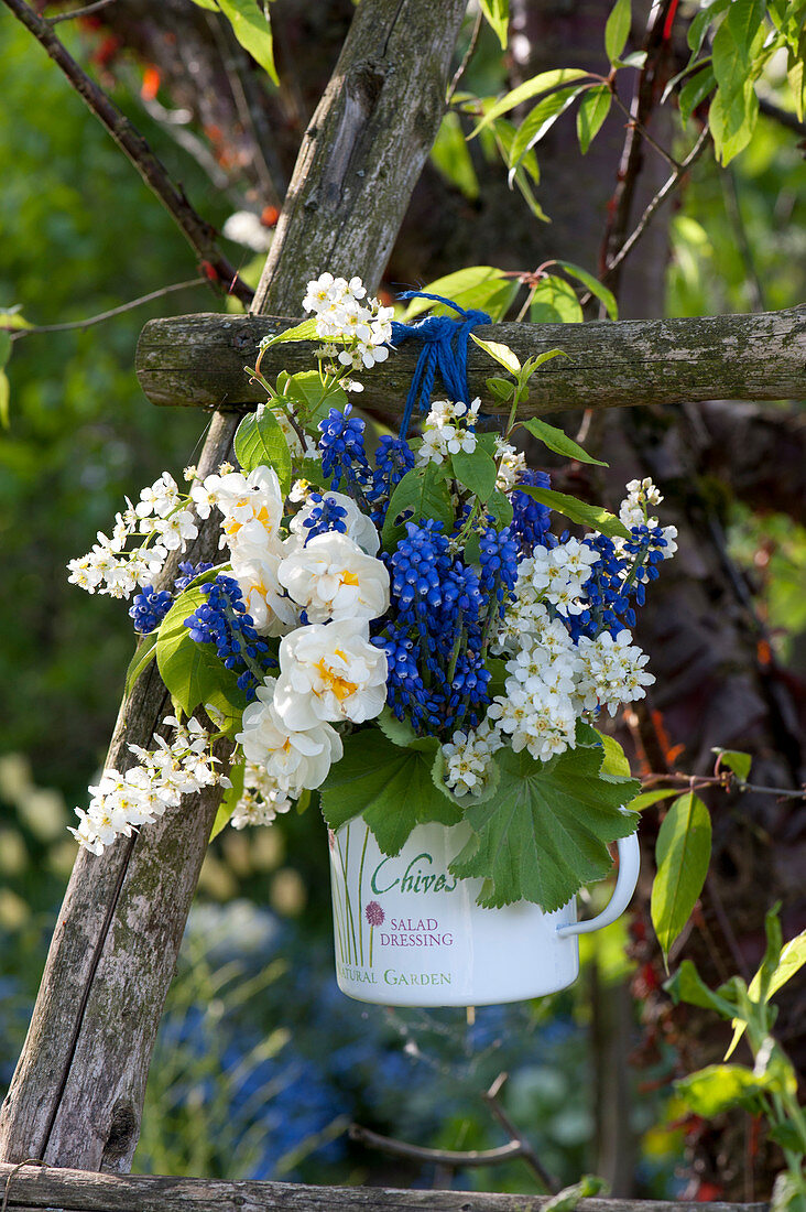 Blue and white bouquet made of Narcissus 'Bridal Crown' (Narcissus)