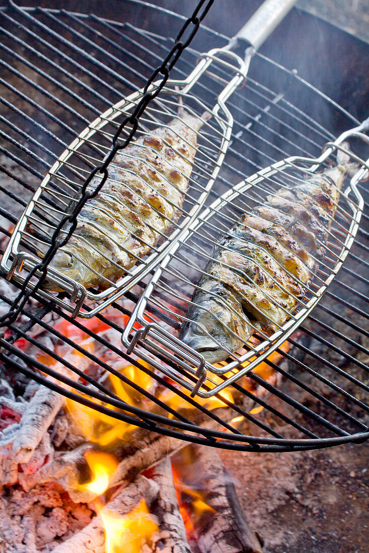 Makrelen in Fischgriller auf Grillrost über Feuerschale