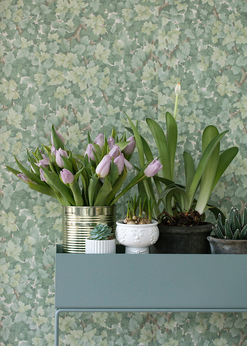 Tulips in a tin and plants in a plant stand