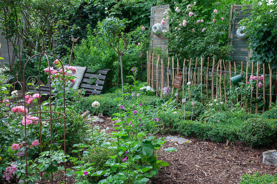 Box tree garden with roses and an antique garden bench
